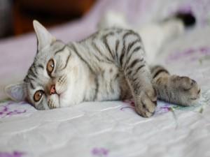 Gato sobre una colcha