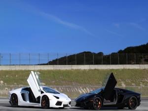 Postal: Lamborghinis Aventador blanco y negro