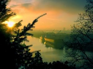 El sol del atardecer entre las ramas de un pino
