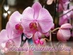 Una orquídea para regalar por San Valentín