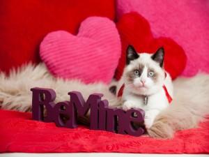 Un bonito gato entre corazones