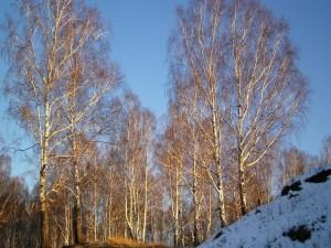 Postal: Árboles en invierno