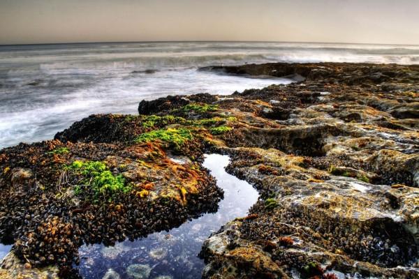 Vegetación y moluscos en las rocas marinas