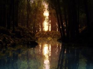 Postal: Sol reflejado en el agua de un bosque