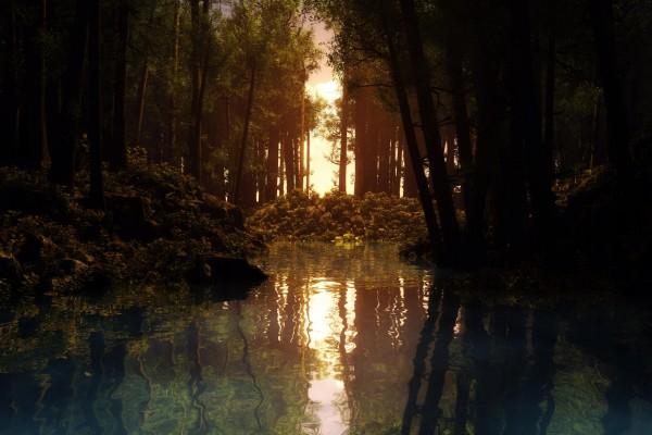 Sol reflejado en el agua de un bosque