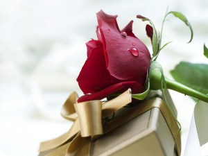 Rosa sobre un regalo para el Día de San Valentín