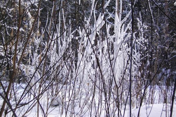 Nieve sobre las ramas desnudas