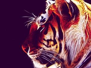Postal: Imagen de un hermoso tigre