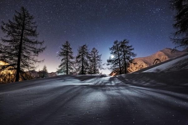 Cielo estrellado en el bosque nevado