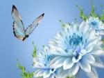 Mariposa azul volando sobre crisantemos