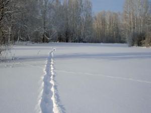Surco en la nieve
