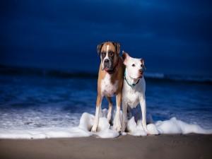 Postal: Dos perros en la orilla del mar