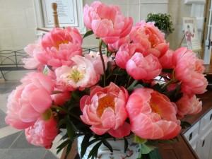 Postal: Hermoso ramo de peonías color coral