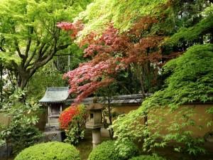 Precioso jardín oriental con varios árboles