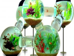 Peces en un original acuario
