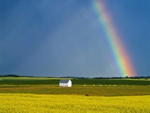 Postal: Hermoso arcoíris en un campo de cultivo