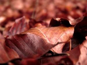Postal: Hojas secas de color marrón