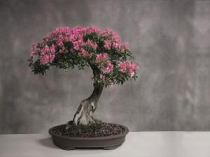 Un hermoso bonsai en flor
