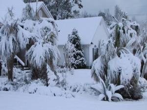 Postal: Palmeras y plantas cubiertas de nieve