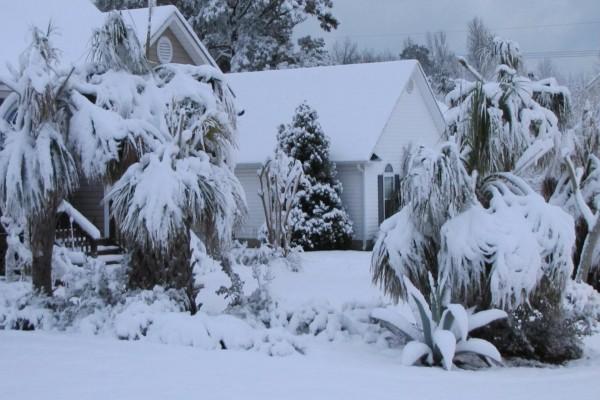 Palmeras y plantas cubiertas de nieve