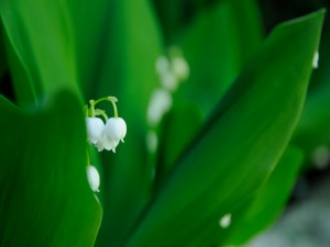 Hermosas florecillas blancas entre hojas verdes