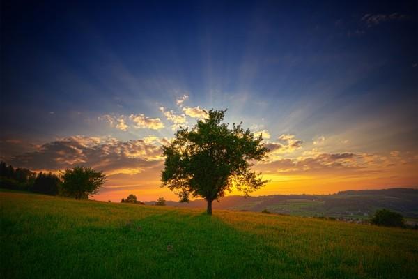 El sol del amanecer tras un árbol
