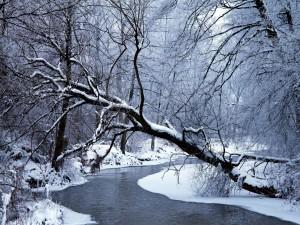 Postal: Árboles cubiertos de nieve junto a un río