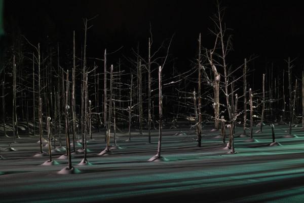 Triste invierno en el bosque
