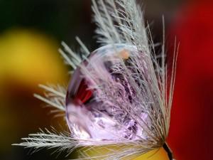Postal: Gota de rocío sobre una flor
