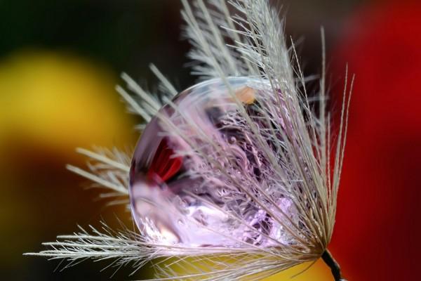 Gota de rocío sobre una flor