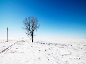 Postal: Árbol solitario en un paisaje nevado