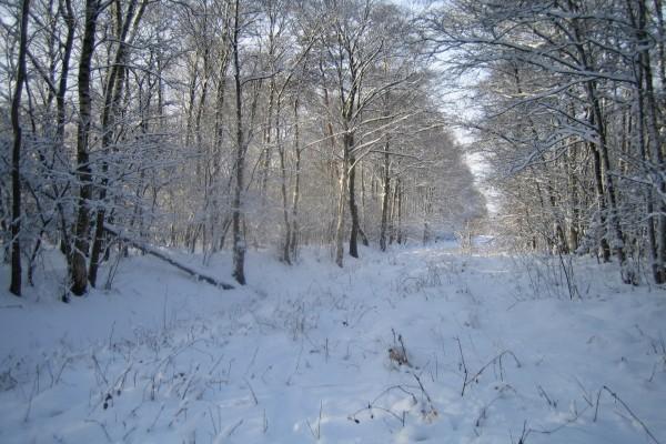 Plantas y árboles sobre la nieve