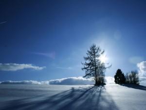 Postal: El sol brillando en un paraje nevado