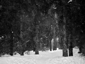 Copos de nieve entre los árboles