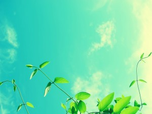 Planta con hojas verdes iluminadas por el sol