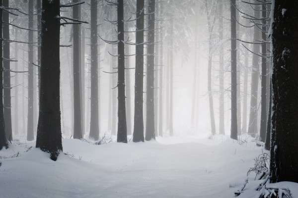 Niebla en un bosque nevado
