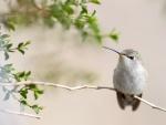 Un bello colibrí sobre una rama