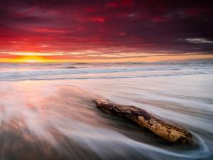 Tronco en la orilla del mar visto al amanecer