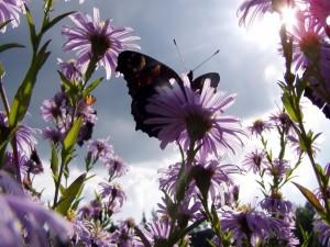 Postal: Mariposa recolectando el néctar de una flor