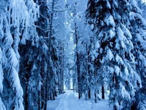 Postal: Nieve en un camino del bosque