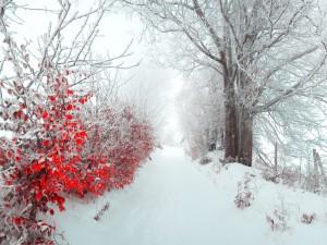 Árboles con hojas rojas en un paisaje nevado