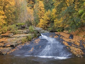 Postal: Hojas otoñales en la corriente de un río