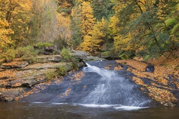 Hojas otoñales en la corriente de un río