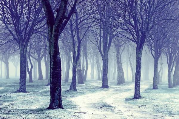 Árboles en un frío día de invierno