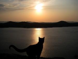 Un gato observando el amanecer