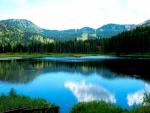 Bonito lago rodeado de pinos
