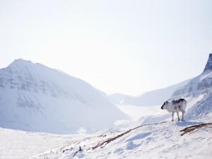 Postal: Reno de Svalbard