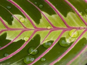 Gotas de agua sobre una bonita hoja