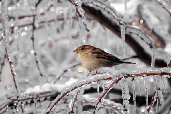 Pájaro sobre la rama helada de un árbol