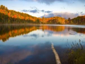 Árboles otoñales a orillas de un río